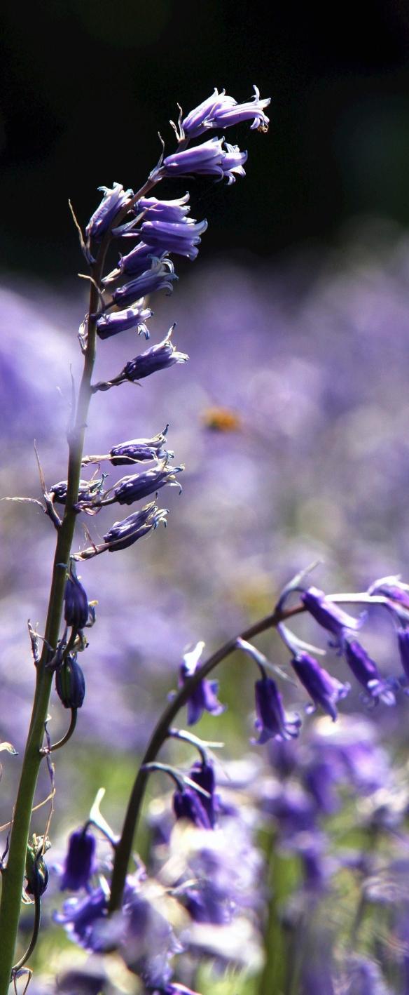 ARCHIVE PHOTOGRAPH PHOTO BY SIMON PENDRIGH pdi photo & film 07770644461 simon.pendrigh@btinternet.com simonpendrigh.com